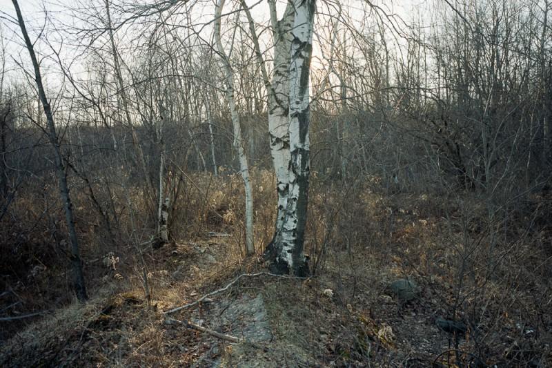 lampton, portland, birch