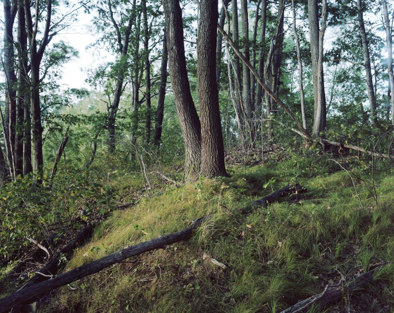 lampton, skunk hour, trees